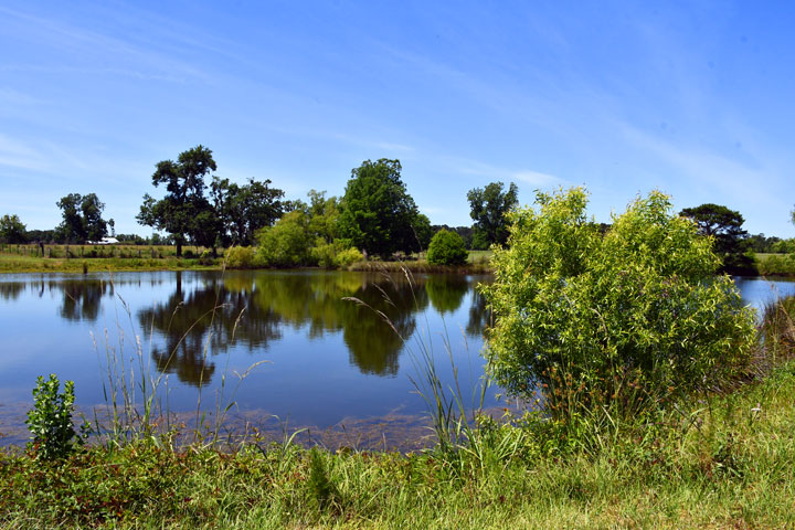 Campgrounds Greensboro Florida