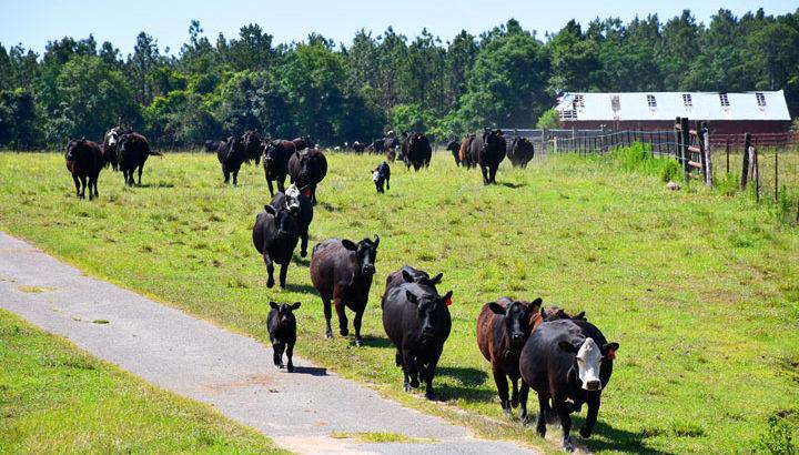 Wainwright Cattle Ranch